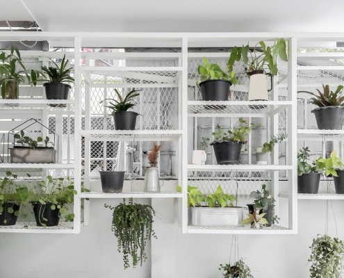 bathroom plant collection