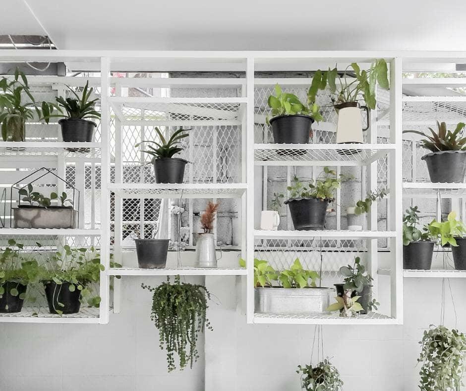 Plants best in the bathroom