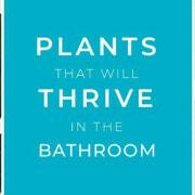 plants-in-the-bathroom main banner
