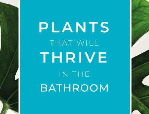 plants-in-the-bathroom main banner