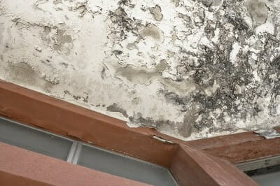 a mouldy bathroom ceiling with crumbling plasterwork