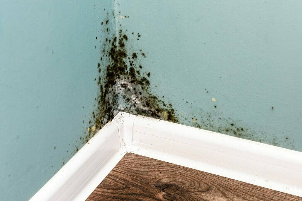 mould on the wall of a new home